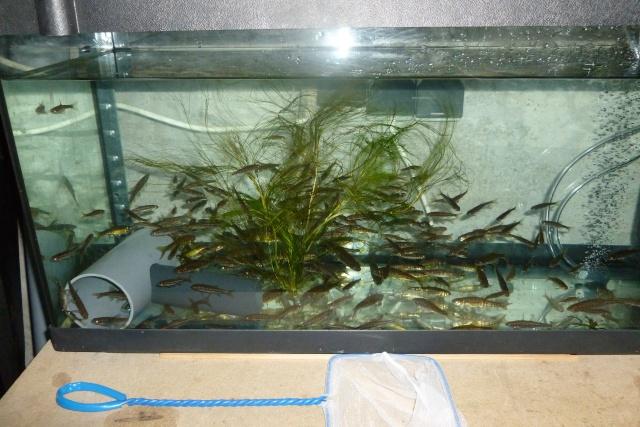 Mon ptit bassin for Vivier a poisson