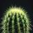 Sukulenti i kaktusi