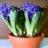 Cvijetajuće sobne biljke