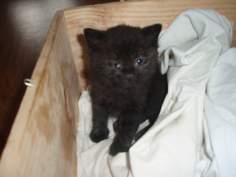 Cherche chat a adopter gratuitement