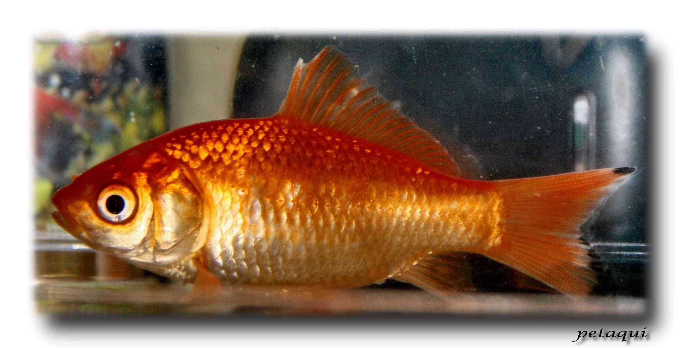 Nombres de peces con escamas - Imagui