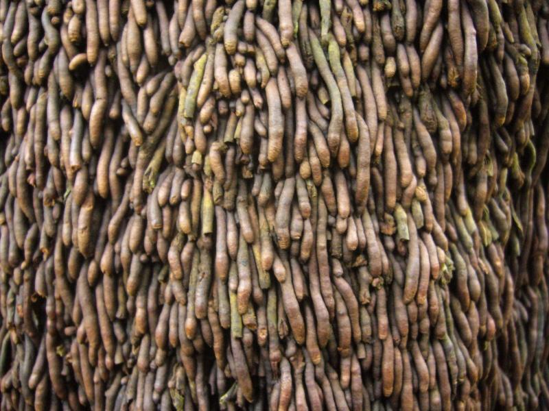 Foug res arborescentes for Commande plantes par correspondance