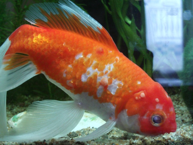 maladies des poissons maladies du poisson maladies piscicoles