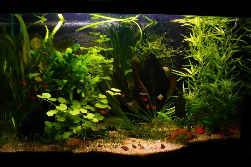 Mon aquarium de 54 litres for Aquarium bac