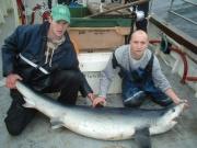 shark110.jpg