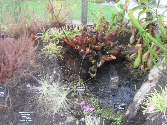 visite au jardin botanique de lausanne installation piller bertrand. Black Bedroom Furniture Sets. Home Design Ideas