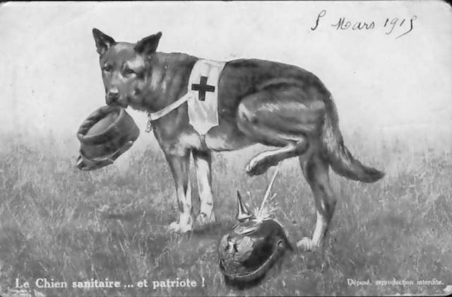 chiens11