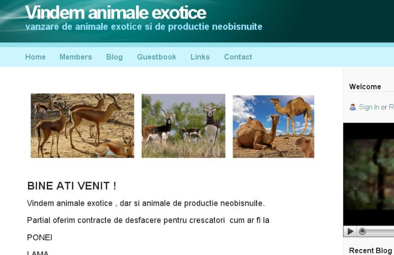 animal10.jpg