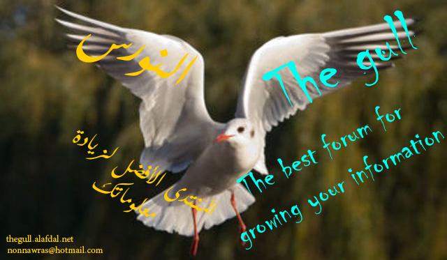 [The gull]