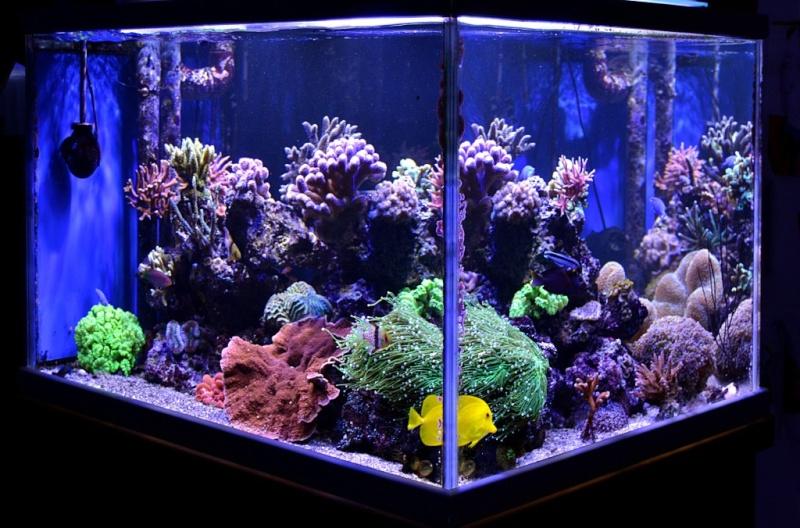 Aquarium r cif tout pour r ussir votre aquarium r cifal for Aquarium ouvert