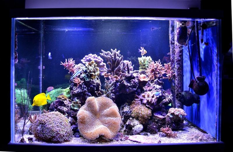 Aquarium eau de mer 350 for Aquarium de mer