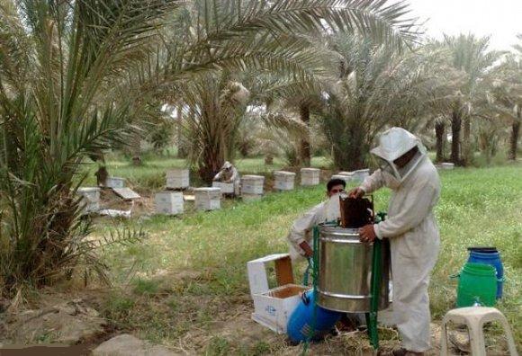 أخبار النحل والنحالين فى المنطقة العربية