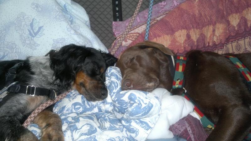 mon chien pisse pendant son sommeil. Black Bedroom Furniture Sets. Home Design Ideas
