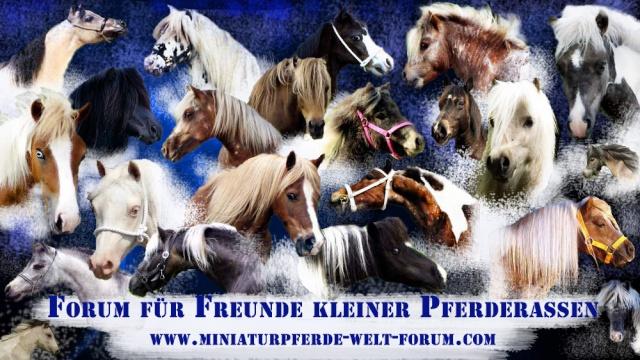 Freunde Der Kleinen Pferderassen