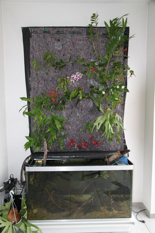 Mur v g tal avec aquarium de 320l paludarium page 2 for Mur vegetal fausse plante