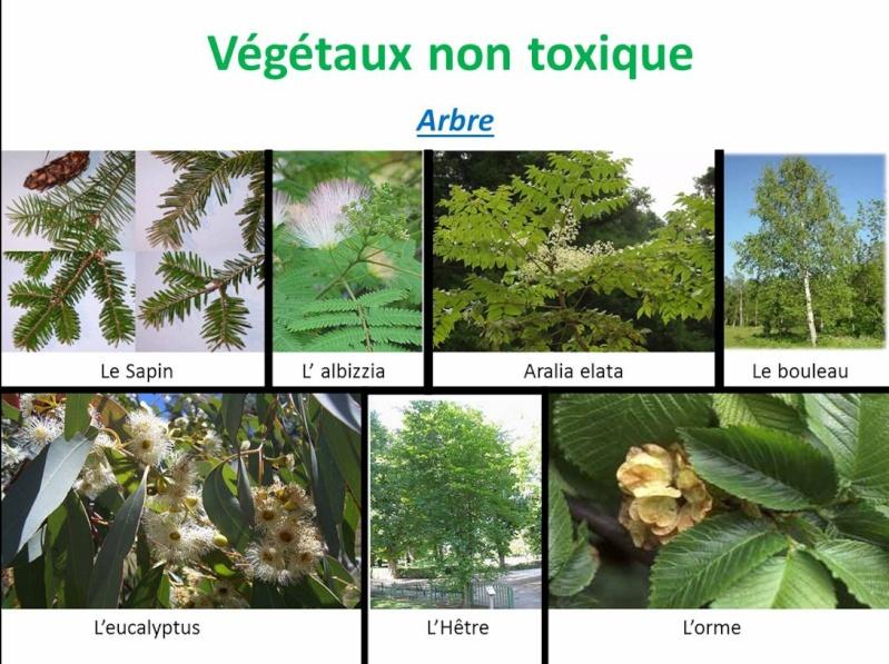 Liste plante toxique chat - Plantes non toxiques pour les chats ...