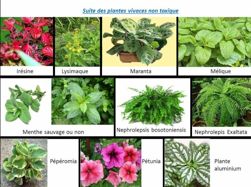 plante interieur non toxique pour chat