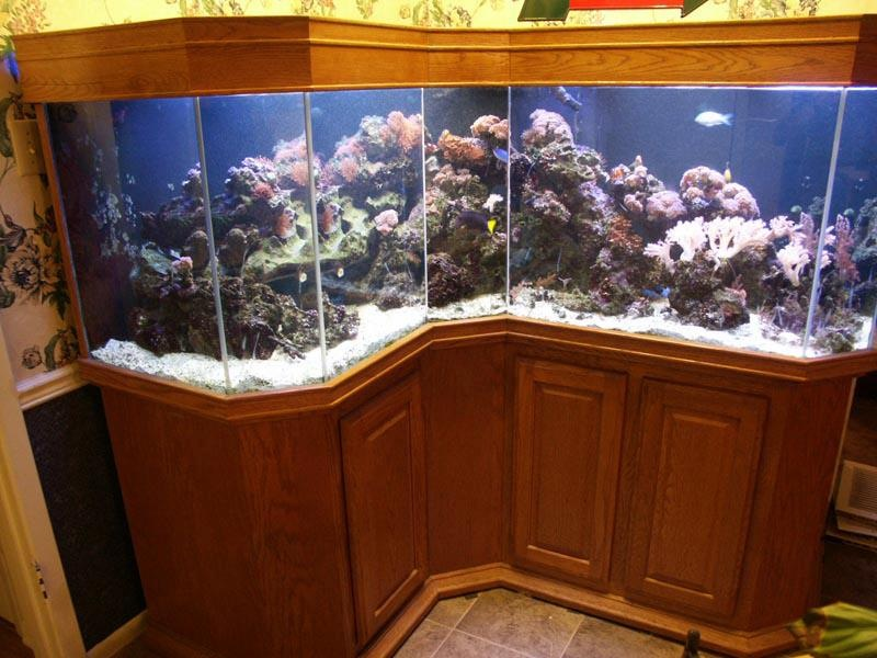 New 260 gallon das corner tank need help for 55 gallon corner fish tank