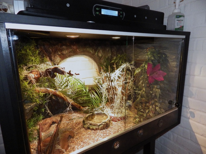 terrarium pantherophis guttatus. Black Bedroom Furniture Sets. Home Design Ideas