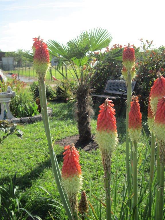Mon jeune jardin de touraine page 8 for Cactus exterieur resistant au froid