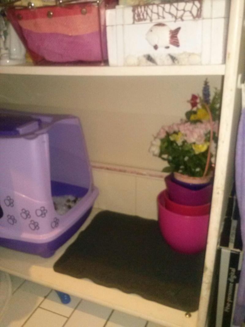 R solu ga a fait ses besoins dans la baignoire for Meuble litiere chat