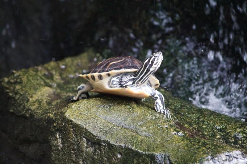 Visites de la ferme aux crocodiles france - Bassin tortue floride strasbourg ...