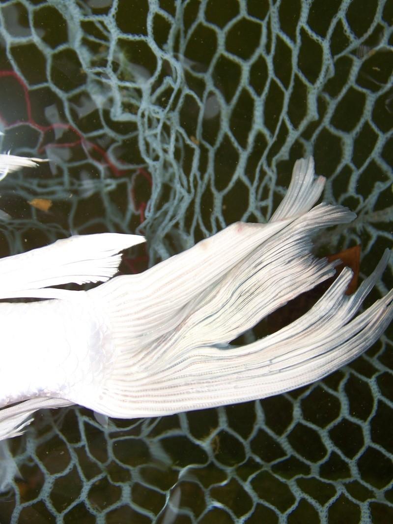 Pustules blanches sur ko voil e for Koi zot i mange zordi