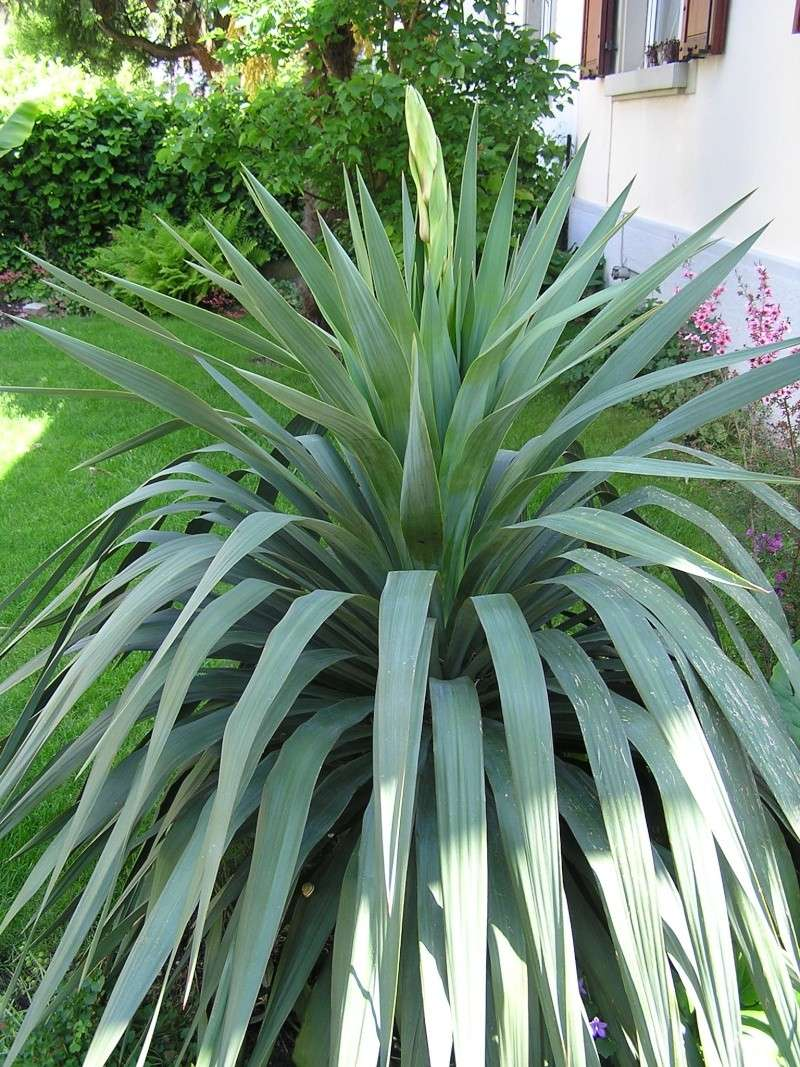 Quelques plantes du jardin for Plantes du jardin
